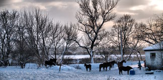 Horseland Fotografia Stock Libera da Diritti