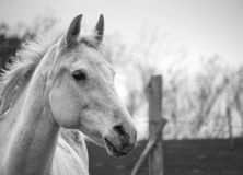 Horseland Royalty Free Stock Images