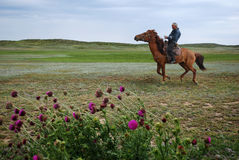 Horseman. Kazakh shepherd. A person born in the saddle. He was 60 years old Royalty Free Stock Image