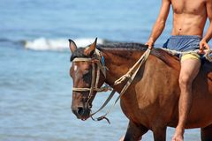 The horseman. Skips on a horse along the sea Royalty Free Stock Photography