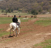 The horseman Stock Photos