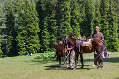 Horseman with horses Royalty Free Stock Photos