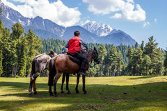 Horseman with horses, beautiful landscape Royalty Free Stock Images