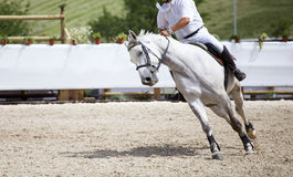 Horseman on its steed at equestrian show Stock Photography