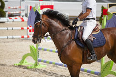Horseman on its steed at equestrian show Stock Photos