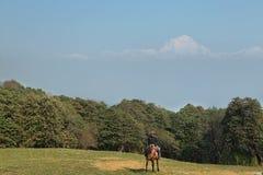 Horseman with rhododendron blossom trees and Dhaulagiri peak. GHOREPANI, NEPAL - APRIL 13, 2016: Horseman with rhododendron blossom trees and Dhaulagiri peak at stock photo