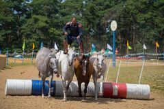 Horseman stunt with horses in contest. Horseman stunt with bow on the 4 horses during a horse track contest and horse show in Romania Royalty Free Stock Image