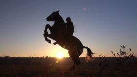 Horseman sits on a horse and gives him two legs in sunset . Slow motion. Silhouette. Side view. Horseman in sunse sits on a horse and gives him two legs horse stock video