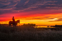 The Horseman stock photography