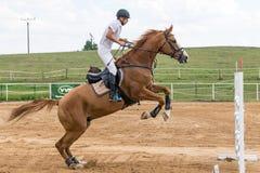 Horsemanin白色在一匹棕色马跳跃 免版税库存图片