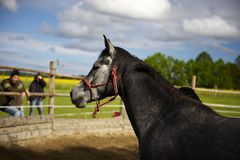 Horsemanship_01 Stock Photography