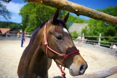 Horsemanship_02 Stock Image