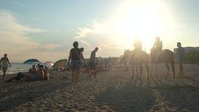Horsemen on the beach. Chase the sun stock video