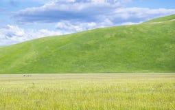 Horsemen in Italian countryside Stock Image