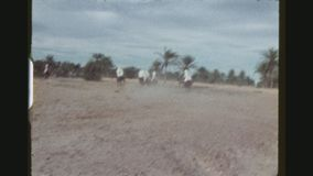 Horsemen Performing Acrobatics. TUNISIA, GABES REGION, WINTER 1973. Two Shot Sequence With Pan Of Horsemen Performing Acrobatics In A Preparation Show For The stock video