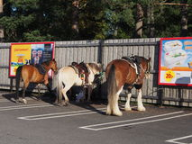 Horseparking. Three horses at parkingplace outside a supermarket. Arvidsjaur Norrbotten Sweden. 2016,07,30 Royalty Free Stock Photo