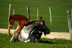 horseplay Стоковая Фотография RF
