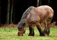 Horsepower Royalty Free Stock Images