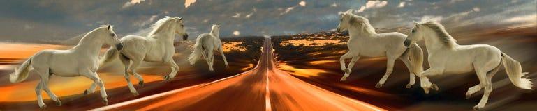 horsepower Cavalli e velocità Astrazione Fotografia Stock