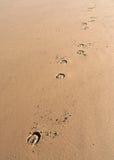 horseprints 免版税图库摄影