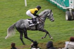 Horserace Arkivfoton
