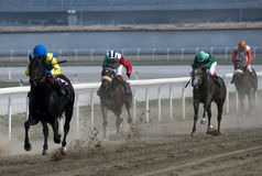 Horserace-7 Royalty Free Stock Photo