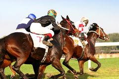 Horserace excelente Imagen de archivo libre de regalías