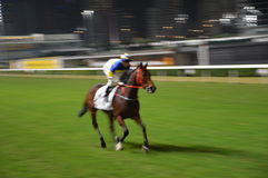 Horserace Hong Kong Royalty Free Stock Photo