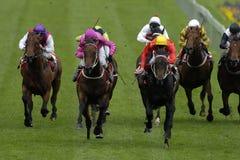 Horseracing 022 Imagem de Stock
