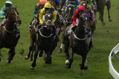 Horseracing 024 Foto de Stock Royalty Free