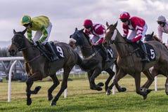 Horseracing Stock Photo