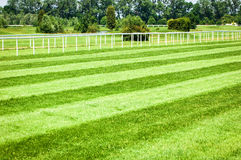 Horseracing track. Grass at a horseracing track - nice background with space for text Stock Photography