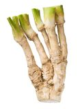 Horseradish. Royalty Free Stock Photo