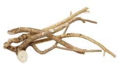 horseradish Obraz Royalty Free