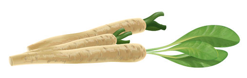Horseradish Royalty Free Stock Photography