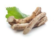 horseradish Foto de Stock