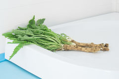 Horseradish with leaves lying on the sink. Horseradish fresh out of the ground with the tops Royalty Free Stock Photos