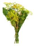 Horseradish liście Zdjęcie Stock