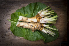 Horseradish Royalty Free Stock Photos