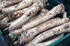Horseradish root Stock Photo