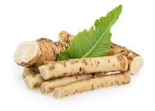 Horseradish roots isolated on white background Stock Photography