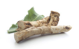 Horseradish's root and green leaf Royalty Free Stock Image