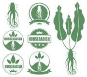 Horseradish Stock Photography