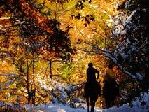 Horseriders in een kleurrijk die bos met sneeuw wordt behandeld stock foto's