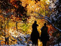 Horseriders in una foresta di automnal con neve Fotografie Stock Libere da Diritti