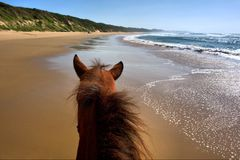 Horseriding on beach. Landscape view from horse. Shot in Sodwana Bay Nature Reserve, KwaZulu-Natal province, Southern Mozambique area, South Africa Royalty Free Stock Photos
