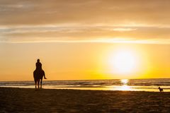 Horseriding at the beach on sunset background. Multicolored outd Stock Photos