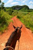 Horseriding in Vinales Stock Image