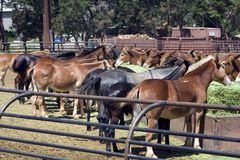 Horses. In the ranch royalty free stock photo