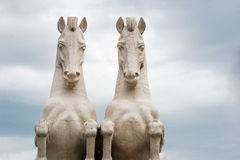 Horses. In a background of gray clouds Royalty Free Stock Image